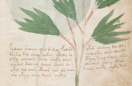 Uit het Voynich manuscript