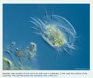 Schermafbeelding 2013-06-30 om 10.07.01