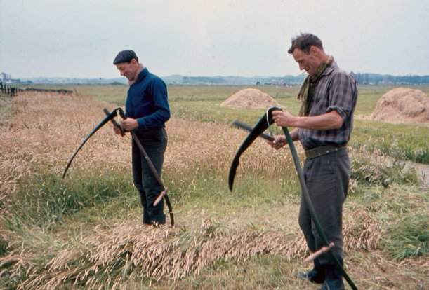 Jaap en Cor Bras maaien 1965 07 40%